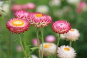 flowers-398941_640