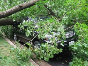 Fallen_tree_in_Washington_D.C._after_Hurricane_Irene
