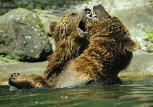 bear-371352_640
