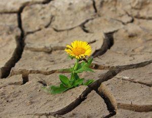 flower-887443_640
