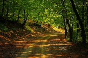 road-1345716_640